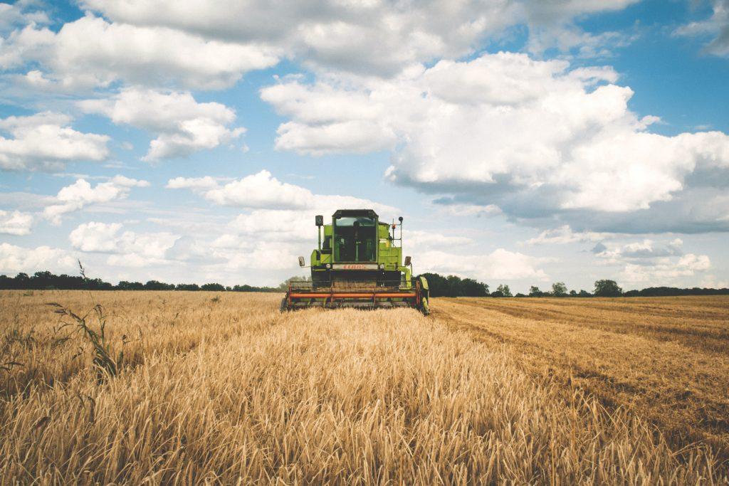 Ein grüner Mähdrescher fährt über ein Getreidefeld.